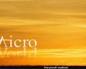 Web dizajn i SEO optimizacija - MikroSvet.Net